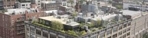 Dachbegrünung und Dachgarten Experte in Köln und Bonn
