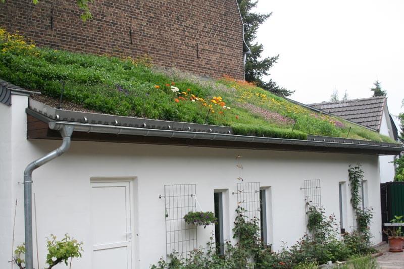 Bunte Dachbegrünung eines Privathauses in Köln