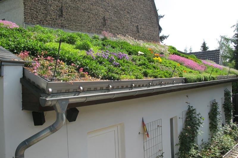 Intensive Dachbegrünung in Köln