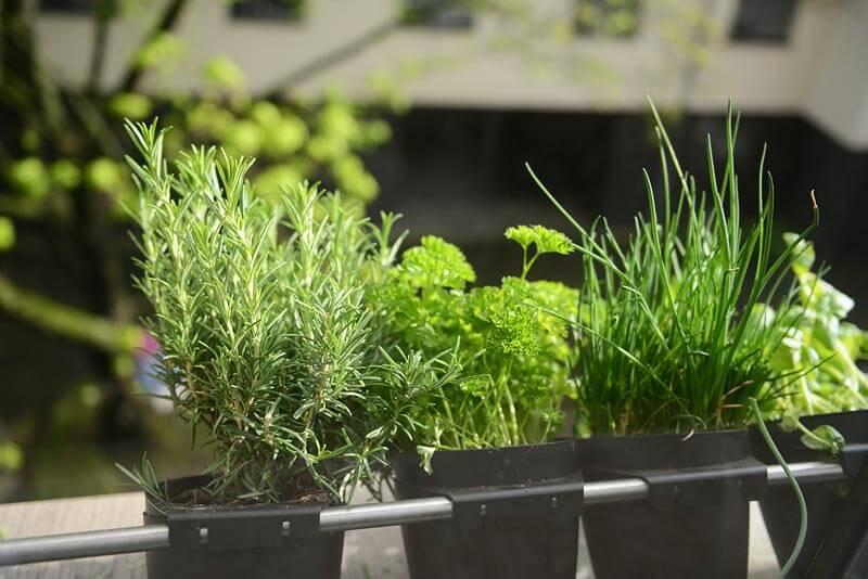 Kr uter im garten so bringen sie w rze in den garten gartenbau und landschaftsbau aus - Gartenbau erftstadt ...
