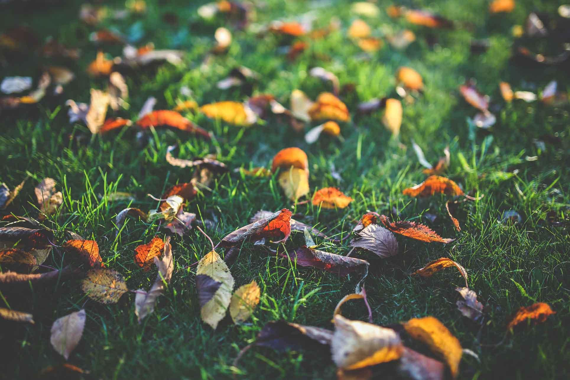 Unserer Angebot – Herbstpflege für Ihren Garten