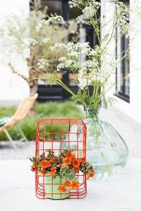 Garten Pflanze des Monats April