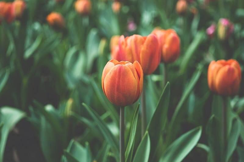 Gartentip Frühling April