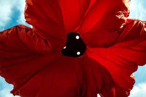 Gartenbeleuchtung 2 Blume