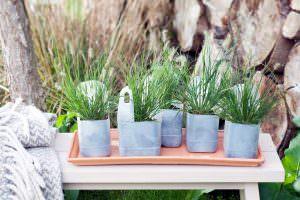 Gartenpflanze Monat September - Federborstengras