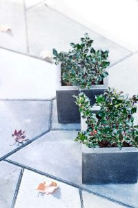Gartenpflanze November