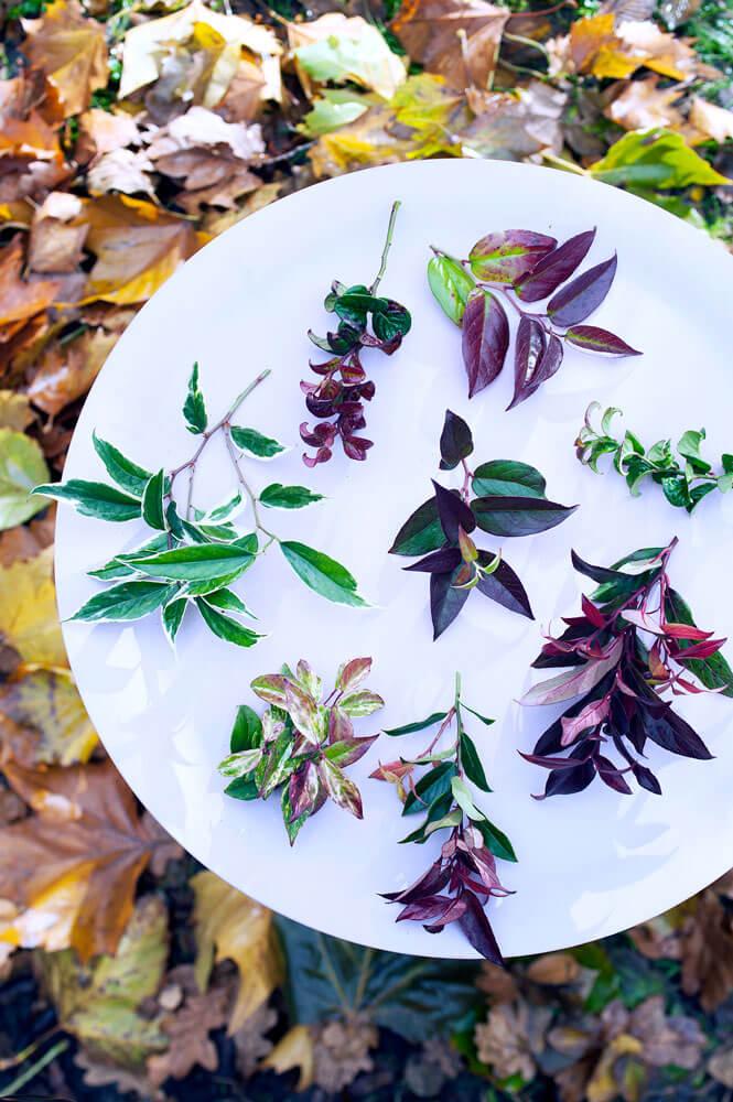 Traubenheide Oktober Leucothoe