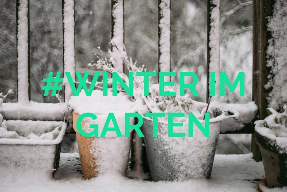 Die 4 Besten Tipps Für Den Garten Im Winter Zeit Zum Planen