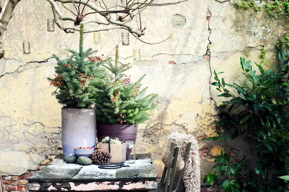 Gartenpflanze Dezember 2016