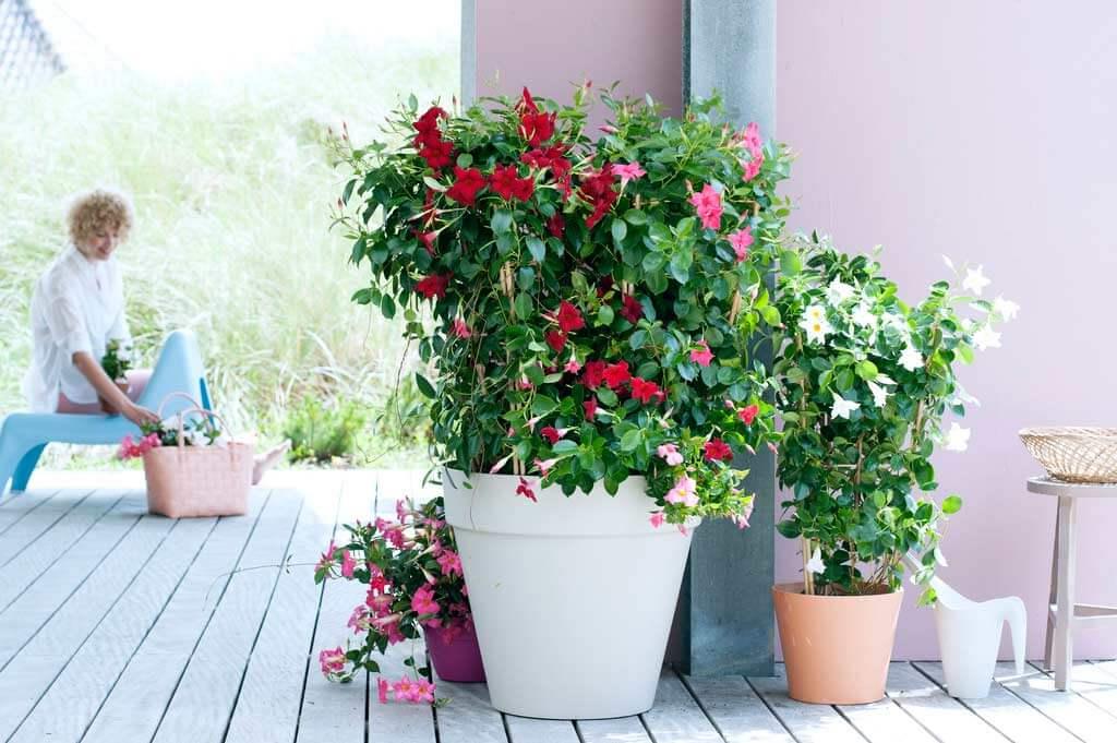 Planzen Monat Mai Gartentip