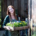 Gartenpflanze Oktober Viola