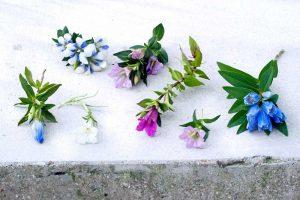 Gartenpflanze im August