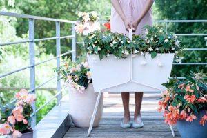 perfekte pflanze für jeden Balkon