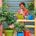 perfekte pflanze für Terrasse