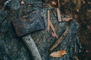 Baumfällen köln bonn
