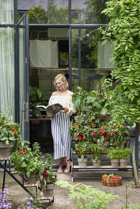 Gartenpflanze Monat Mai Gemüsepflanze