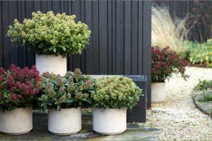 Gartenpflange November Skimme