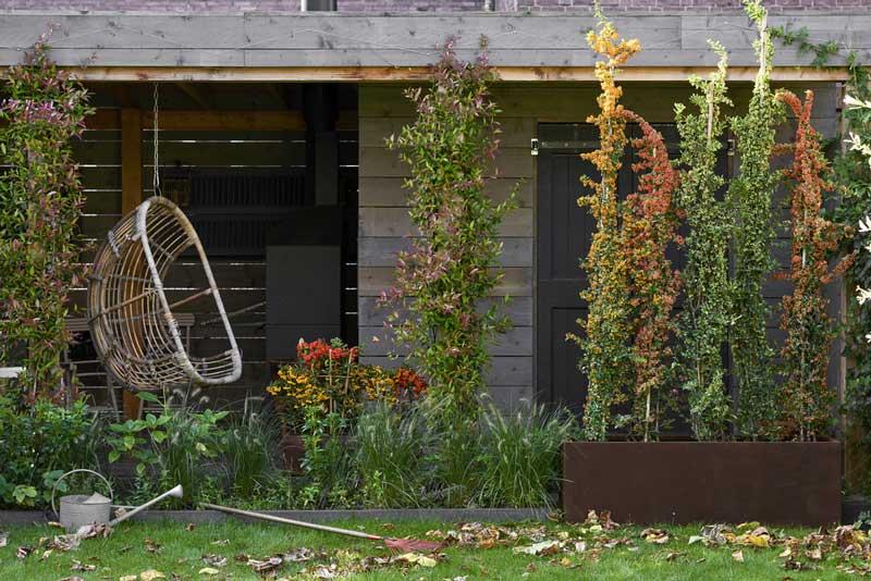 Gartenpflanze im Okober