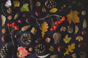 Herbst Garten